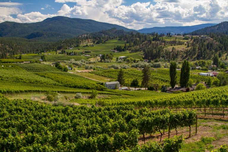 Okanagan Photography